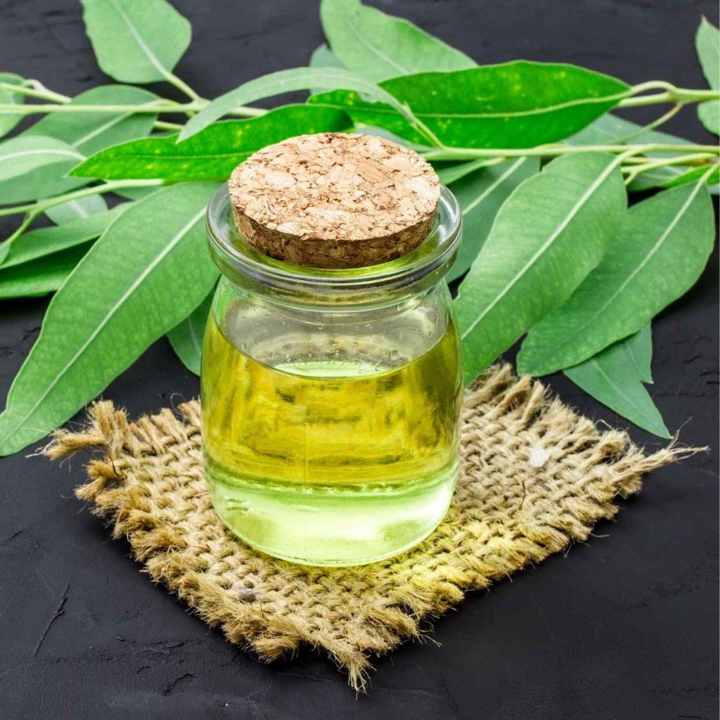 masaje con aceite esencial de eucalipto